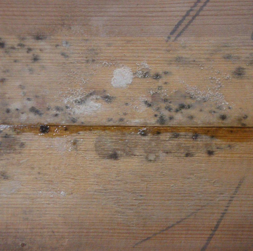 Schimmelsporen auf Holz